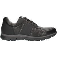 kengät Miehet Matalavartiset tennarit Nero Giardini A800482U Black
