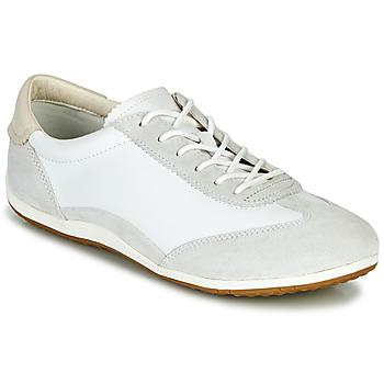 kengät Naiset Matalavartiset tennarit Geox D VEGA White / Grey
