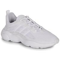 kengät Miehet Matalavartiset tennarit adidas Originals HAIWEE White