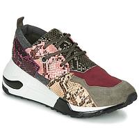 kengät Naiset Matalavartiset tennarit Steve Madden CLIFF Multicolour