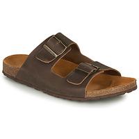 kengät Miehet Sandaalit ja avokkaat André VISON Brown
