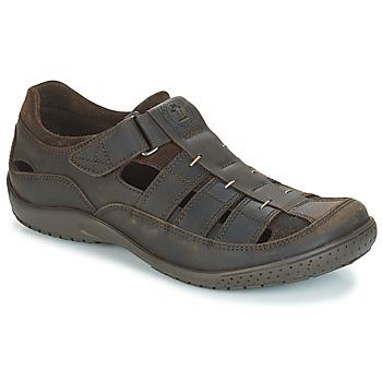 kengät Miehet Sandaalit ja avokkaat Panama Jack MERIDIAN Ruskea