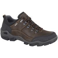 kengät Miehet Vaelluskengät Imac  Dark Brown