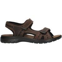 kengät Miehet Urheilusandaalit Imac 503370 Brown