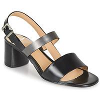 kengät Naiset Sandaalit ja avokkaat Perlato 11805-JAMAICA-NOIR Musta
