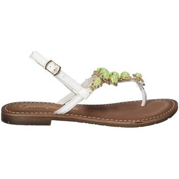 kengät Naiset Varvassandaalit Gardini 1108754 Valkoinen