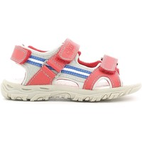 kengät Lapset Sandaalit ja avokkaat Chicco 01055470 Punainen