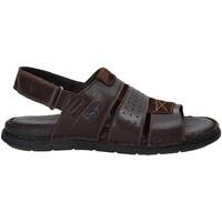 kengät Miehet Sandaalit ja avokkaat Valleverde 20831 Ruskea