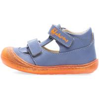 kengät Pojat Sandaalit ja avokkaat Naturino 2013359-03-1C72 Sininen