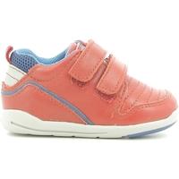 kengät Lapset Matalavartiset tennarit Chicco 01056499000000 Punainen