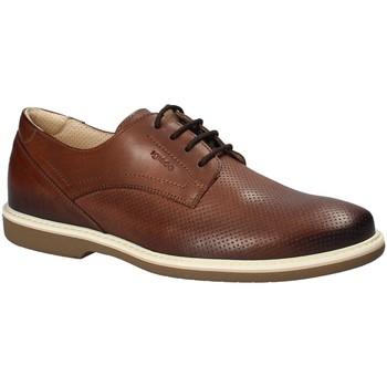 kengät Miehet Derby-kengät IgI&CO 1107622 Ruskea