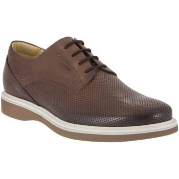 kengät Miehet Derby-kengät IgI&CO 1107 Ruskea