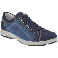 kengät Miehet Matalavartiset tennarit IgI&CO 1113 Sininen