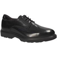kengät Miehet Derby-kengät Exton 1680 Musta