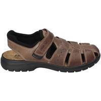 kengät Miehet Sandaalit ja avokkaat Enval 3247522 Ruskea