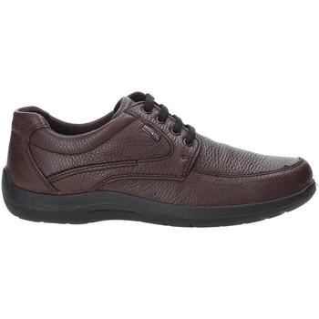 kengät Miehet Matalavartiset tennarit Enval 4233511 Ruskea