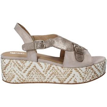kengät Naiset Sandaalit ja avokkaat IgI&CO 1188 Harmaa