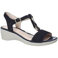 kengät Naiset Sandaalit ja avokkaat Stonefly 110216 Sininen