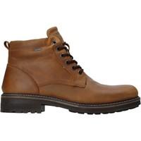 kengät Miehet Bootsit IgI&CO 4122422 Ruskea