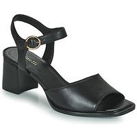 kengät Naiset Sandaalit ja avokkaat Minelli TURINA Musta
