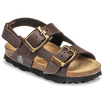 kengät Pojat Sandaalit ja avokkaat Citrouille et Compagnie KELATU Brun