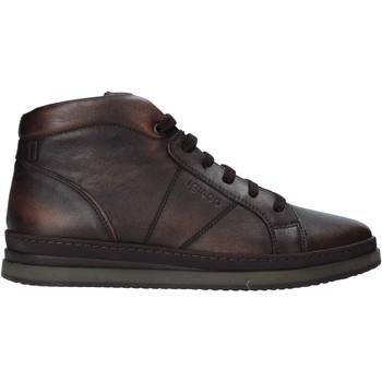 kengät Miehet Bootsit IgI&CO 6135655 Ruskea