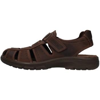 kengät Miehet Sandaalit ja avokkaat Enval 7219111 BROWN