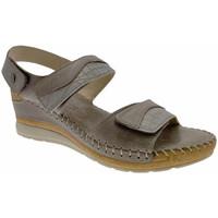 kengät Naiset Sandaalit ja avokkaat Riposella RIP11244marr marrone