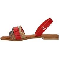 kengät Naiset Sandaalit ja avokkaat Gattinoni PEGAF6171WH WHITE