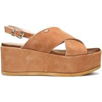 kengät Naiset Sandaalit ja avokkaat Alberto Guardiani AGW003001 Ruskea