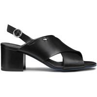 kengät Naiset Sandaalit ja avokkaat Alberto Guardiani AGW003405 Musta