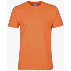 vaatteet Lyhythihainen t-paita Colorful Standard T-shirt  Burned Orange orange