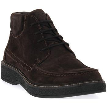 kengät Miehet Bootsit IgI&CO CLAYTON Marrone