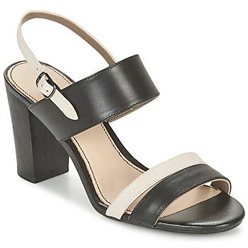 kengät Naiset Sandaalit ja avokkaat Hush puppies MOLLY MALIA Black