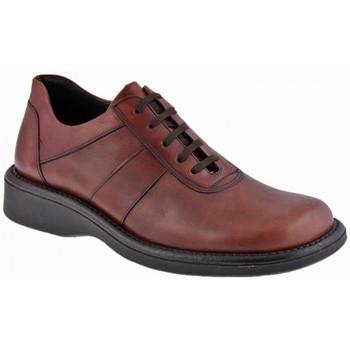 kengät Miehet Bootsit Nicola Barbato  Violetti