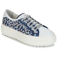 kengät Naiset Matalavartiset tennarit Serafini SOHO Blue