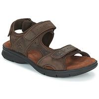 kengät Miehet Sandaalit ja avokkaat Panama Jack SALTON Brown