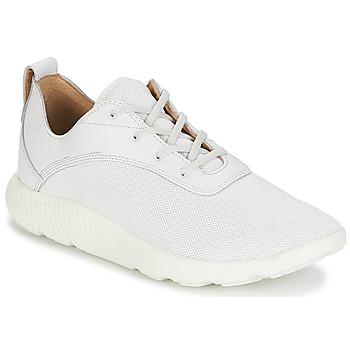 kengät Miehet Matalavartiset tennarit Timberland FLYROAM White